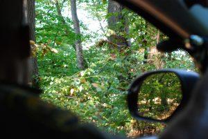 On the Ginseng Patrol in Appalachian Ohio