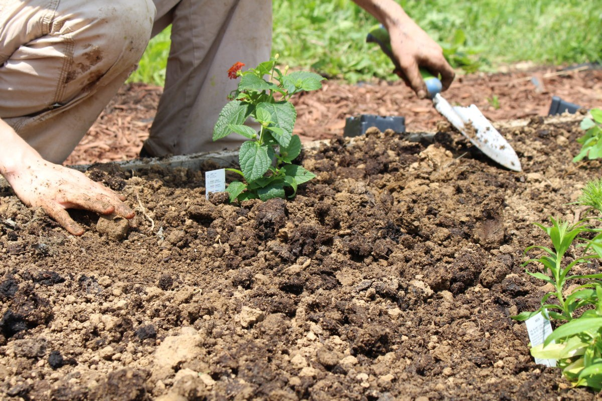 Back To The Garden: How Green Thumbs Help With Addiction Recovery