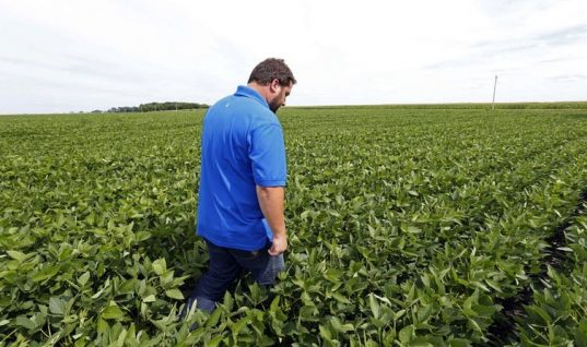 American Farmers Want Trade Partners Not Handouts – An Agricultural Economist Explains