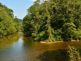 The Chattooga River near a cane restoration site in Mountain Rest, South Carolina. Photo: Sarah Melotte/100 Days in Appalachia