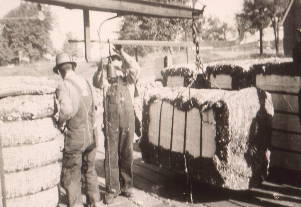 Mill workers processing ginned cotton circa 1920. Photo: Courtesy Douglas County Museum of History and Art